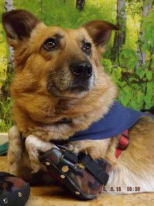 Hilfsmittel für Tiere: Ellenbogen-Rutschorthesen bei angeborener Ellenbogenmissbildung