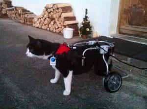 Hilfsmittel für Tiere: Auch für Katzen gibt es Rollwagen