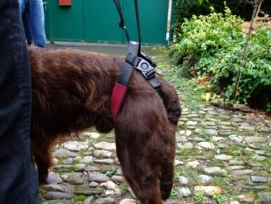 gehilfen für hunde